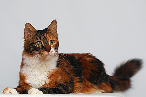 aphrodite cat